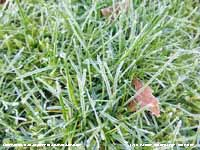 Frost and frozen dewdrops on grass.